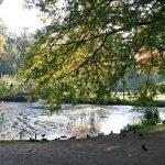 Die Teiche sind verschlammt, das Grün ungepflegt - dennoch ist der Kurpark schön