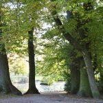 Die Bäume im Kurpark sind zum Teil über 100 Jahre alt.