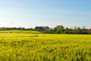 Die favorisierte Lösung zur Hinterlandanbindung würde durch Wälder und Felder führen