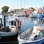 Die idyllische Szenerie macht den Niendorfer Hafen zum beliebtem Ausflugsziel