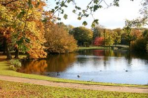 Goldene Blätter, sonnige Stimmung: Herbst im Godewindpark