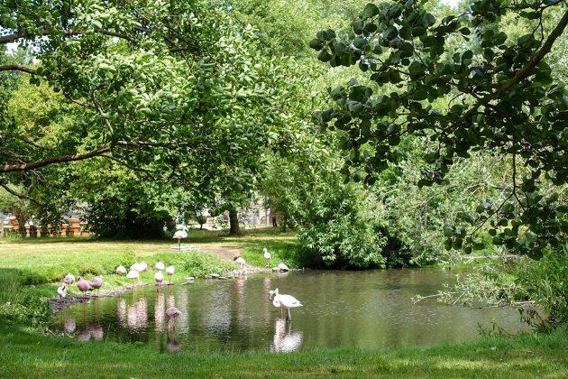 Idylle im Niendorfer Naturschutzgebiet: der Eulen- und Vogelpark bietet Entspannung und Entdeckung seltener Vogelarten.