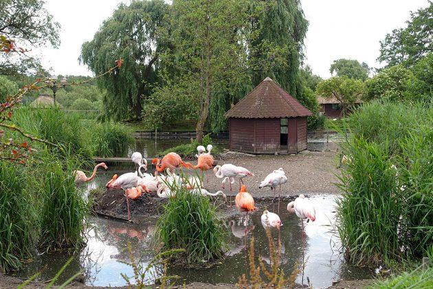 Schon eine Art Wahrzeichen für viele Niendorf-Urlauber: Der Flamingoteich am Eingang zum 2015-Meter-Wegenetz.