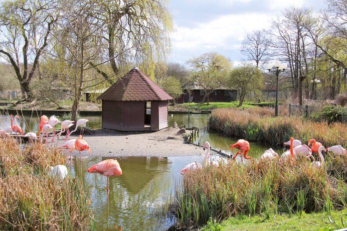 Ausflugsziel im Niendorfer Naturschutzgebiet: Eulen, Enten, Flamingos und Exoten finden im Niendorfer Vogelpark ein behagliches Quartier für sich und den Nachwuchs.