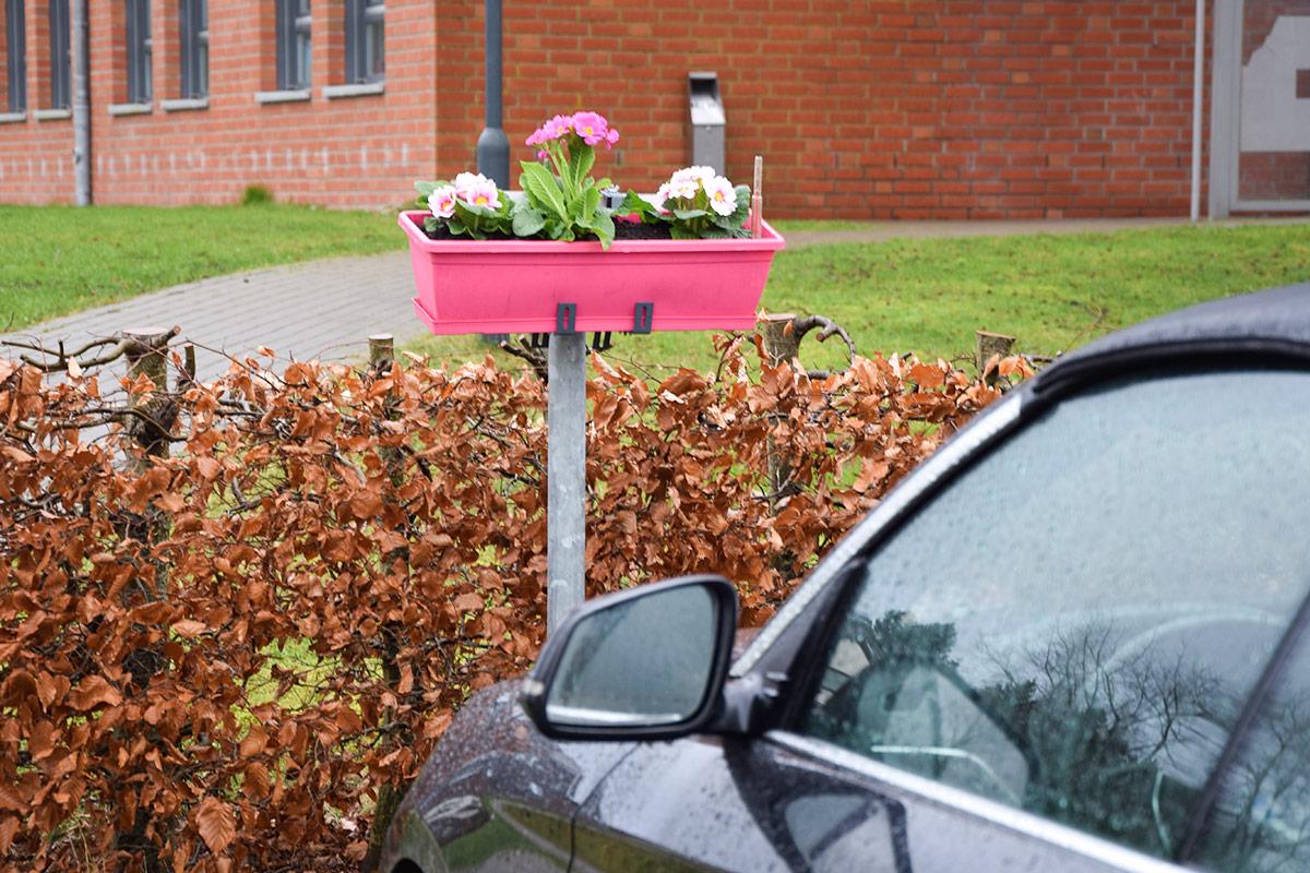 Ein Blumenkasten in schrillem Pink markiert den Parkplatz der neuen Bürgermeisterin. © Katrin Gehrke