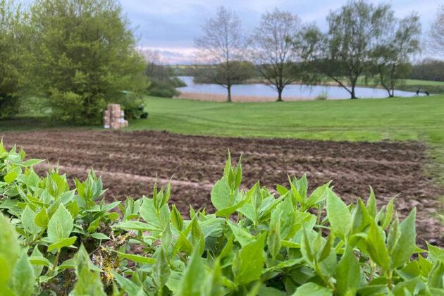 Ganz neu: Weinanbau auf dem Golfplatz am Oeverdiek. Jetzt sollen auf 1,5 Hektar Fläche Trauben wachsen.