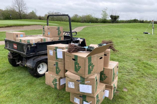 Ganz ungewohntes Bild: Kistenweise stapeln sich die Setzlinge auf dem Golfplatz; in drei Jahren sollen die Trauben geerntet und zu Grauburgunder werden.