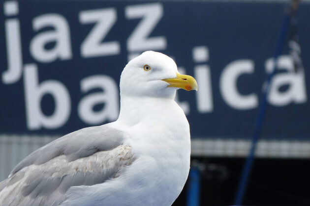 Das schönste Symbol für Jazz am Meer: Die Möwe hört andächtig zu. © Daniel Weth